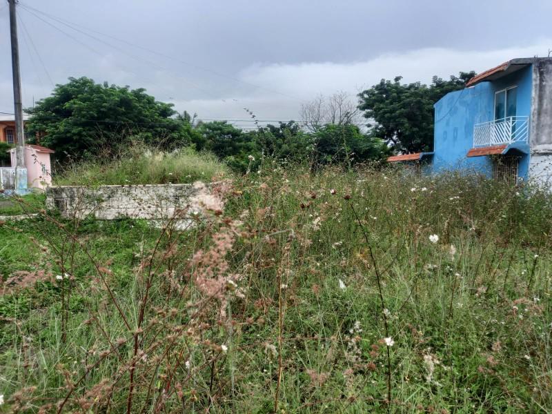 Áreas verdes llenas de maleza en El Coyol