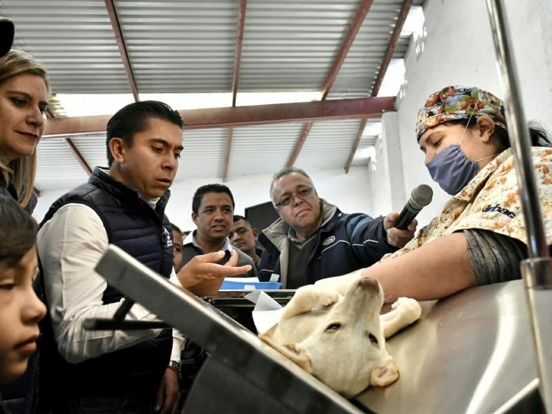 Arranca campaña de esterilización en Corregidora
