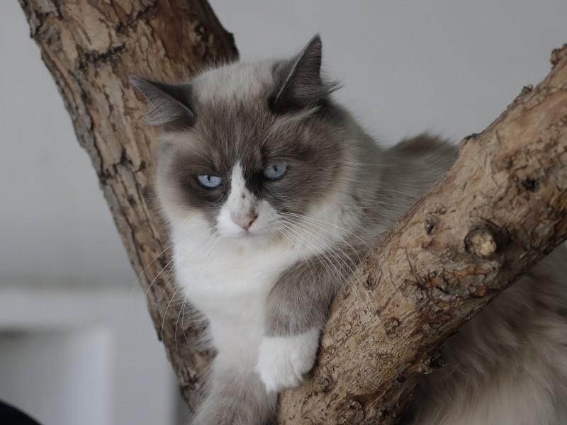Arranca campaña de esterilización para gatos