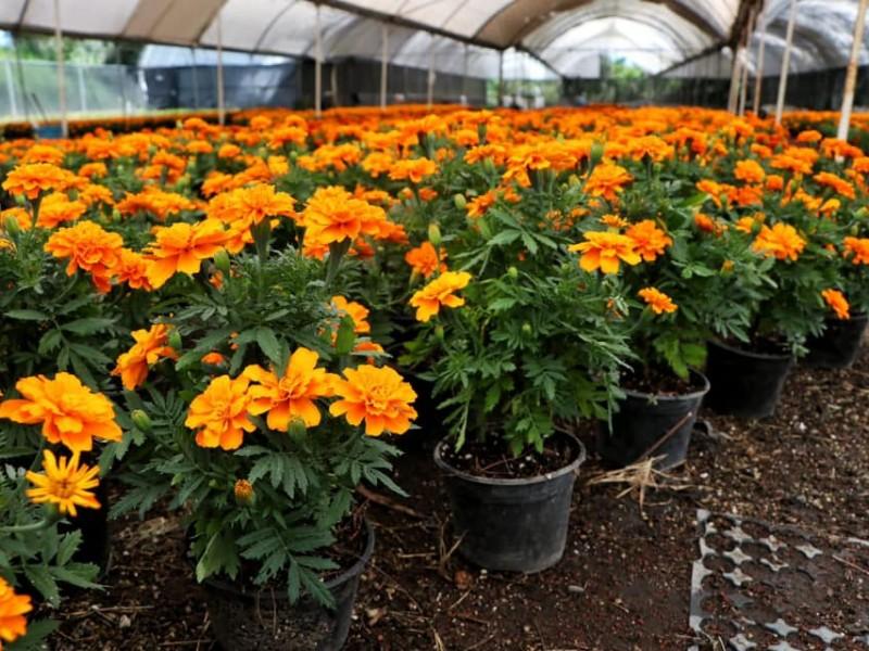 Arranca venta de flor de cempasúchil en Atlixco