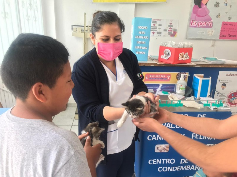 Arrancó la Jornada Nacional de Vacunación antirrábica