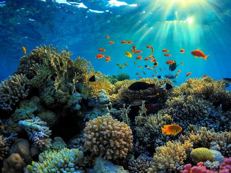 Arrecifes, principales afectados con el calentamiento global