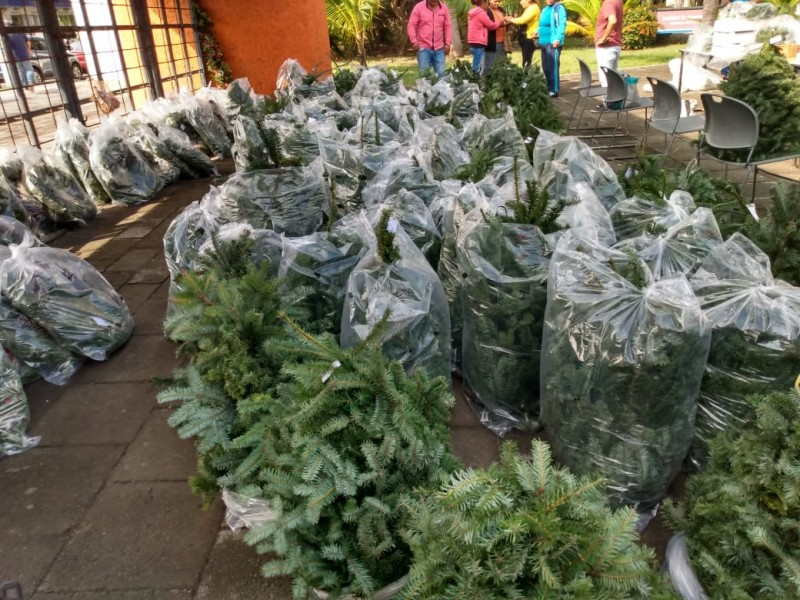 Artesanas de Perote realizan venta de pinos