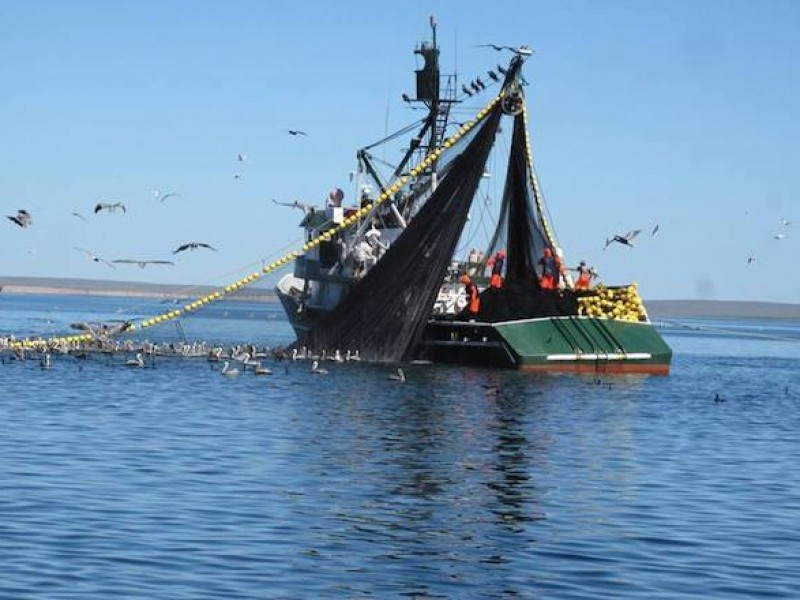 Aseguran sardineros ser responsables con el medio ambiente