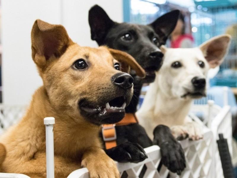 Asociación de caninos denuncia falta de acciones