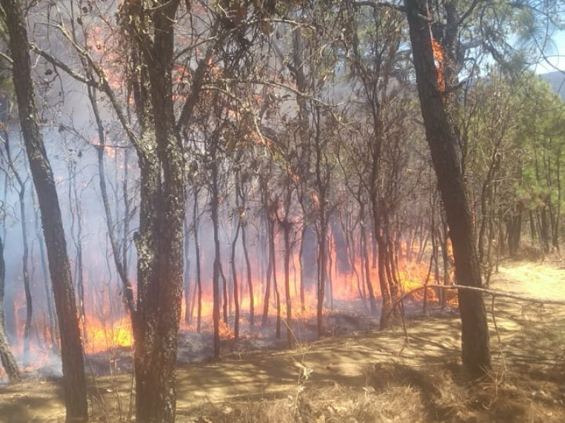 Atacan incendios forestales al Edomex
