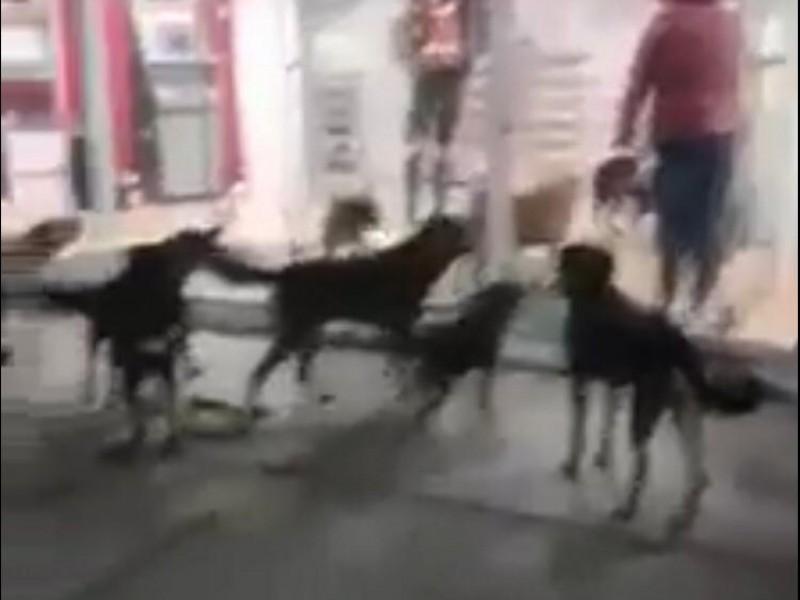 Atacan perros a mujer en Rafael Lara Grajales