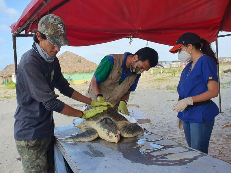 Atentos ante neoplasias en tortugas