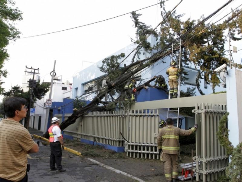 Atienden caída de árboles en CDMX