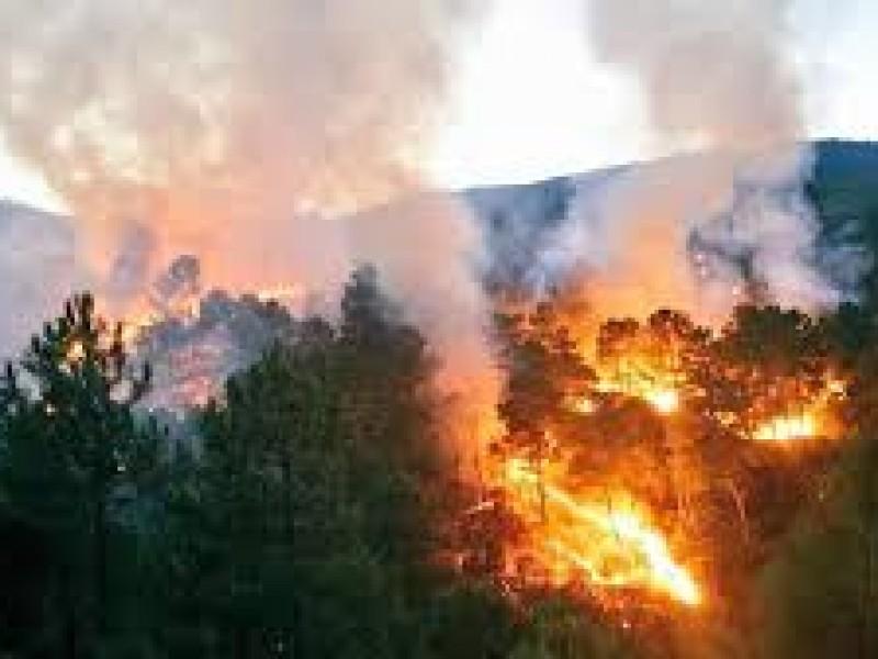 Atiende Conafor 30 incendios forestales en el año