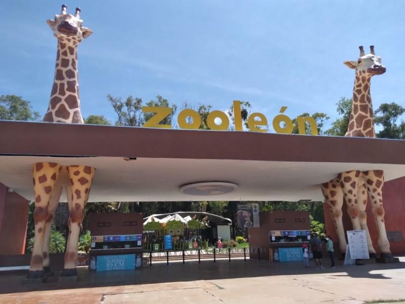 Aumenta afluencia de visitas al zoológico de León