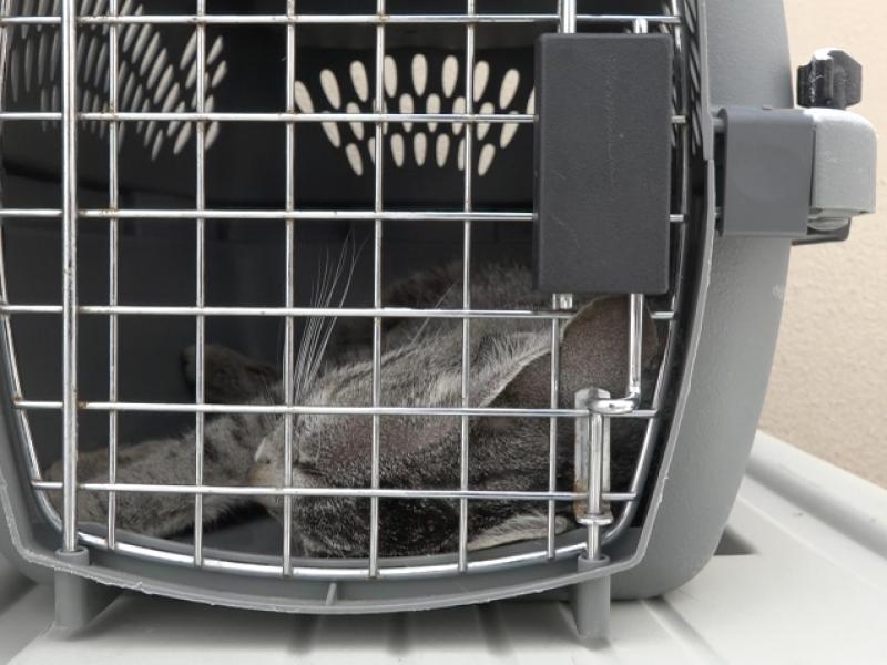 Aumenta el abandono de mascotas por Covid-19