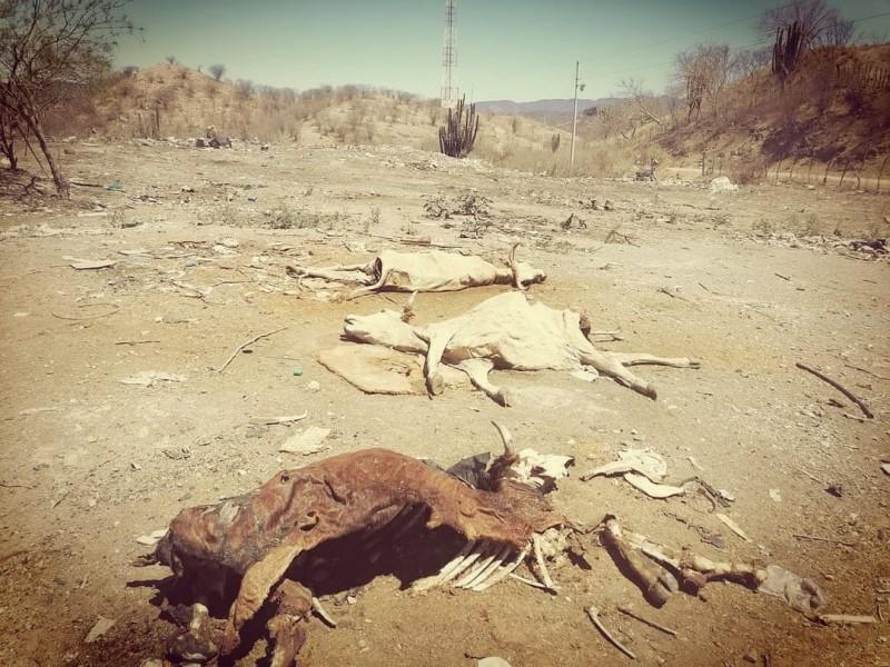 Aumenta muerte de ganado, en riesgo patrimonio de ganaderos