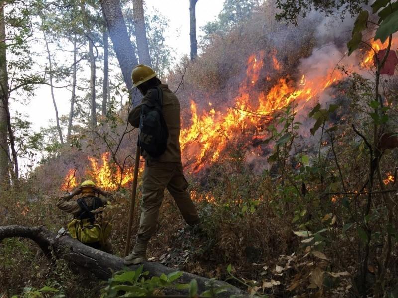 Aumentan a 11 los incendios forestales en Nayarit