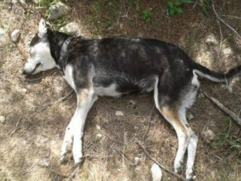Aumentan casos de envenenamiento de perros en colonias de Tuxpan