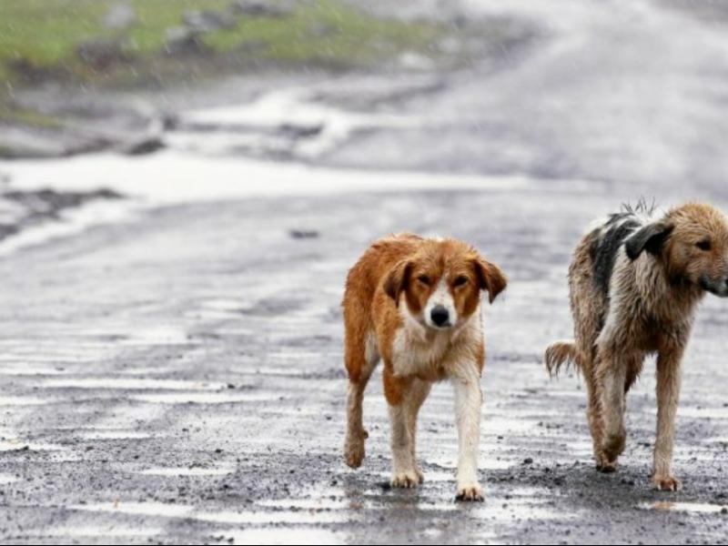 Aumentan casos de maltrato animal en Zamora