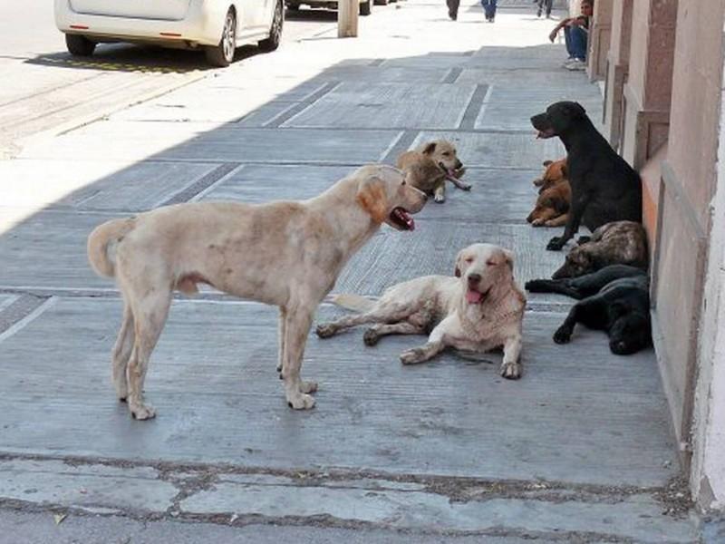 Aumentaron un 70 % los perros en situación de calle