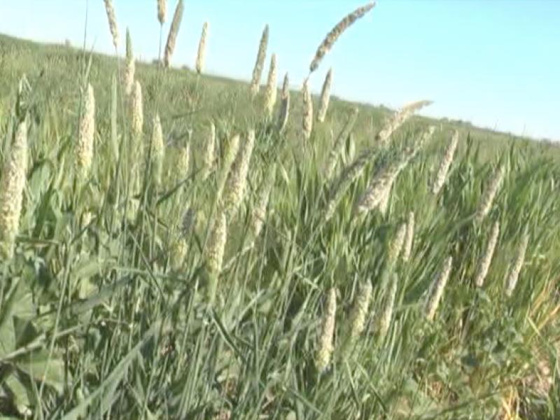 Aumento de 4.8% no es suficiente: Agricultores