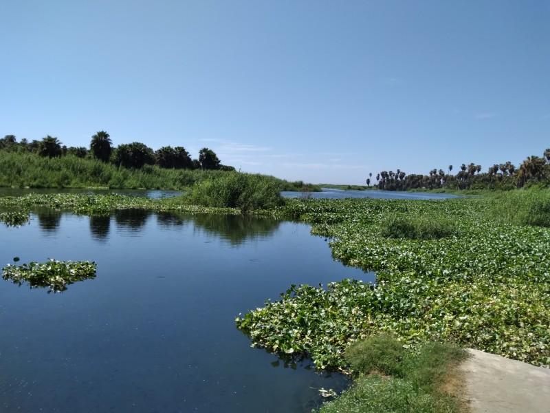 Autoridades realizarán muestreo de agua en el Estero para diagnóstico