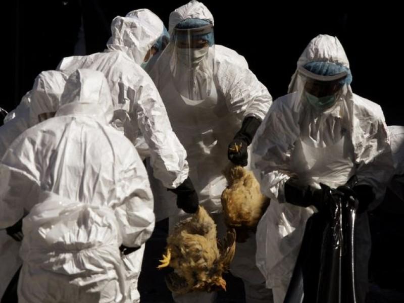 Autoridades sanitarias indias investigan muerte de menor por gripe aviar