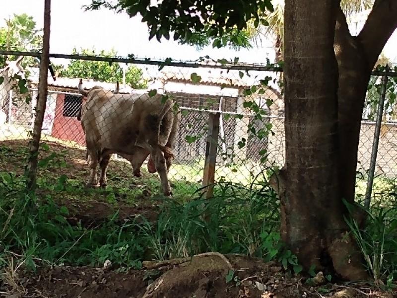 Autoridades sin atender denuncia sobre criadero de ganado