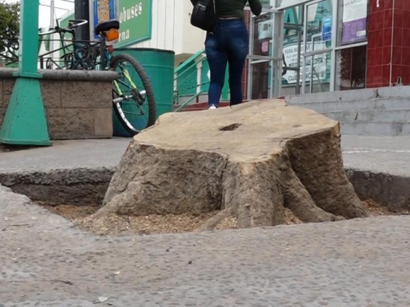 Autorizan tala de árboles frente a central