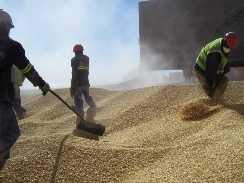Avanzan exportaciones de maíz desde El Puerto de Topolobampo