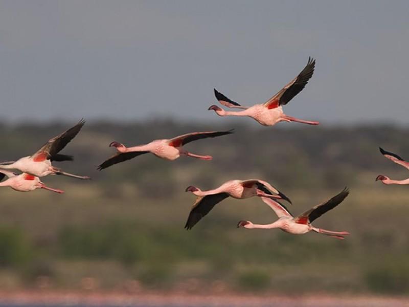 Aves migratorias se enfrentan a la supervivencia en día mundial