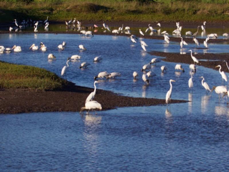Avistamiento de aves dejó importante derrama económica en México