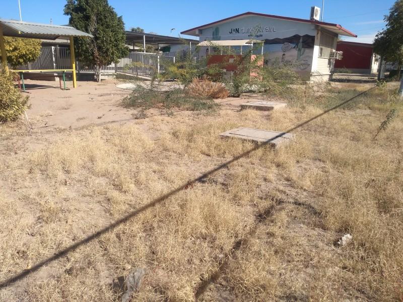 Ayuntamiento y regidores rescatarán árboles en escuelas pública de Hermosillo