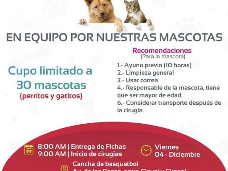 Ayuntamiento de Tepic esterilizará mascotas en colonia El Ocho