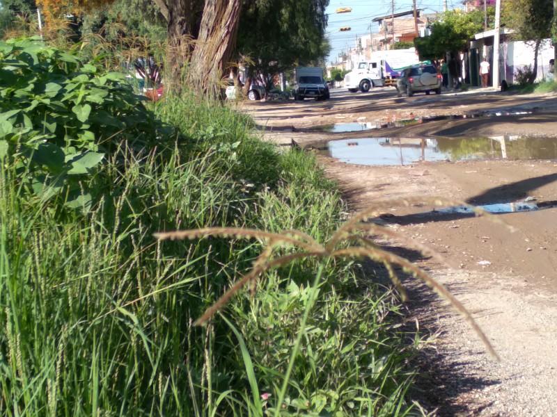 Baches y hierba crecida generan inseguridad en Valle de Señora