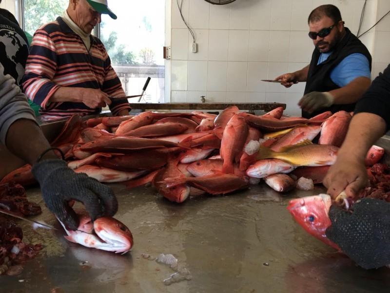 Se desploman capturas de pescado en bahía de Topolobampo