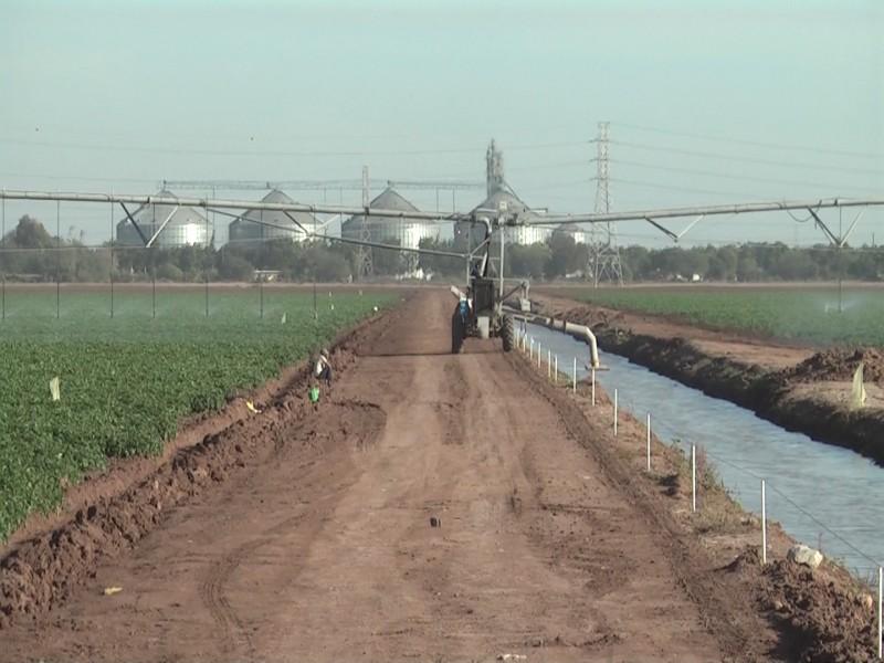 Bajas temperaturas incrementa necesidad de agua en cultivos