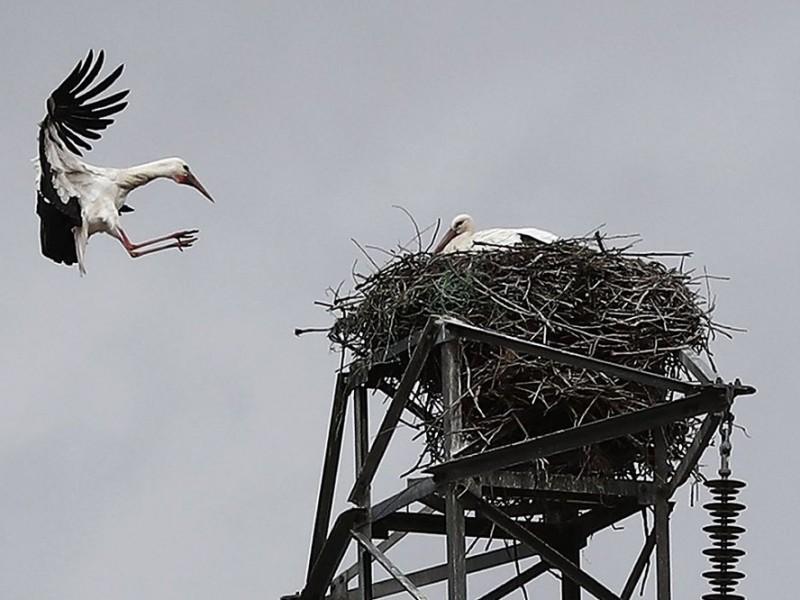 Bajas temperaturas pueden causar afectaciones en aves