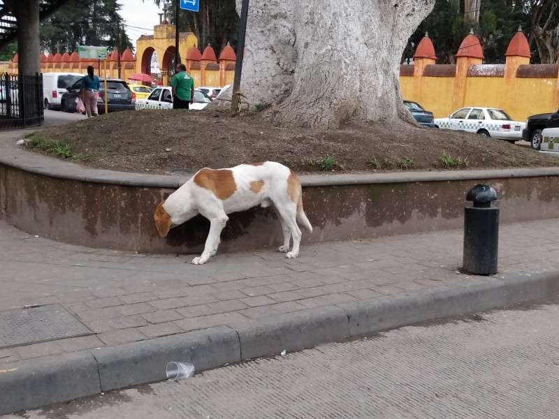 Bebederos y comederos para perros en Toluca