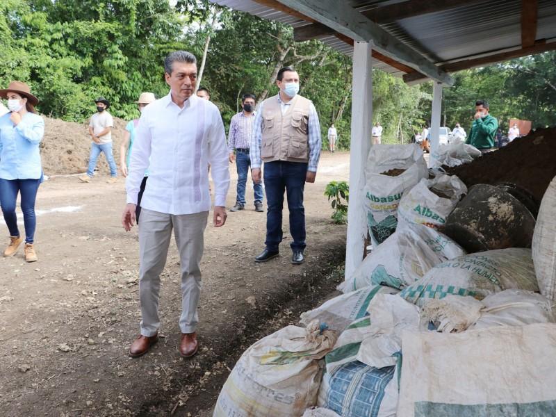 Beneficios del programa sembrando vida para Chiapas