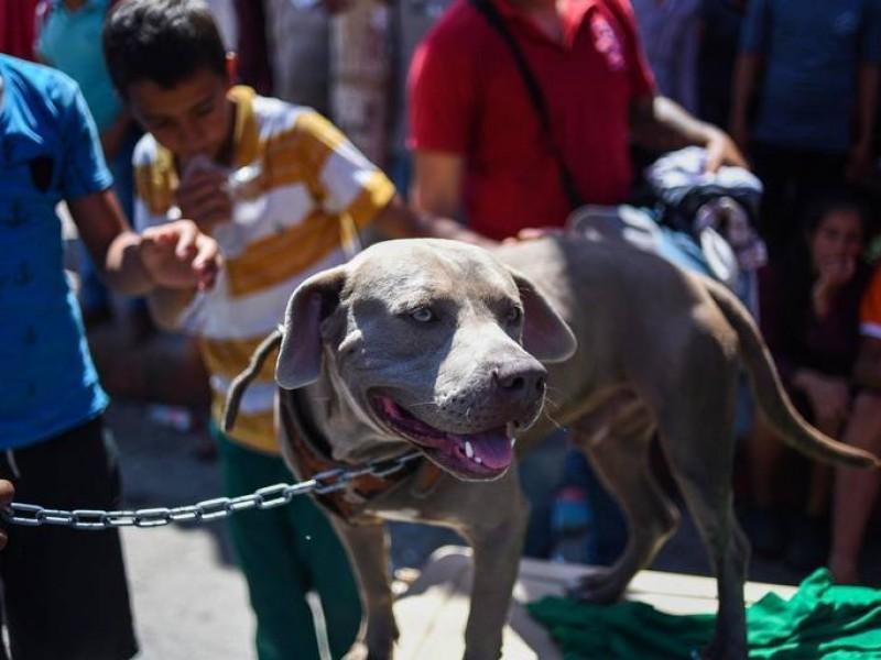 Bolillo, el perro migrante: busca el sueño americano