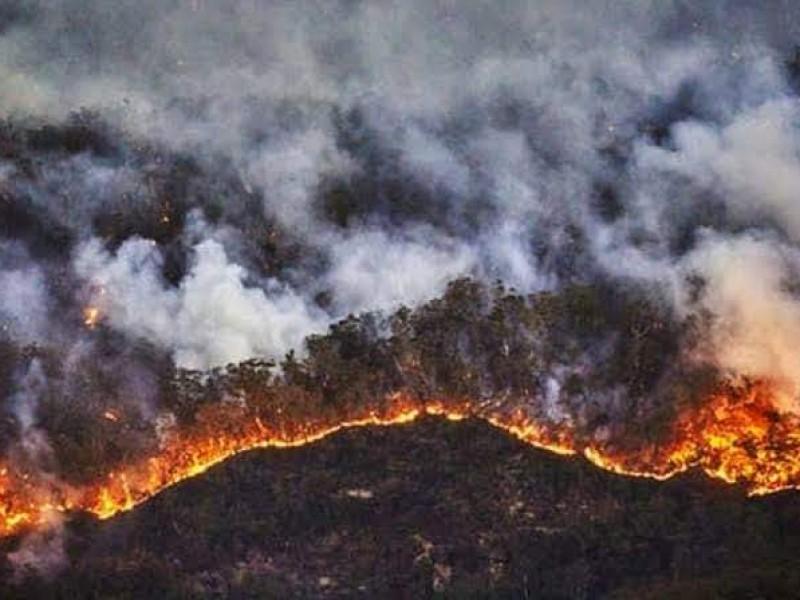 Brigadistas buscan sofocar incendio forestal en Los Reyes