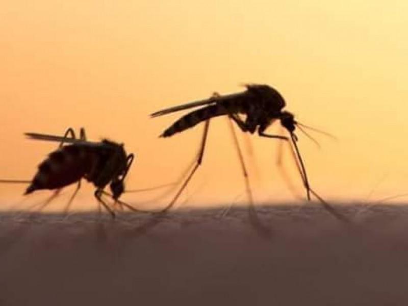 Brote de dengue afecta a decenas de familias zamoranas