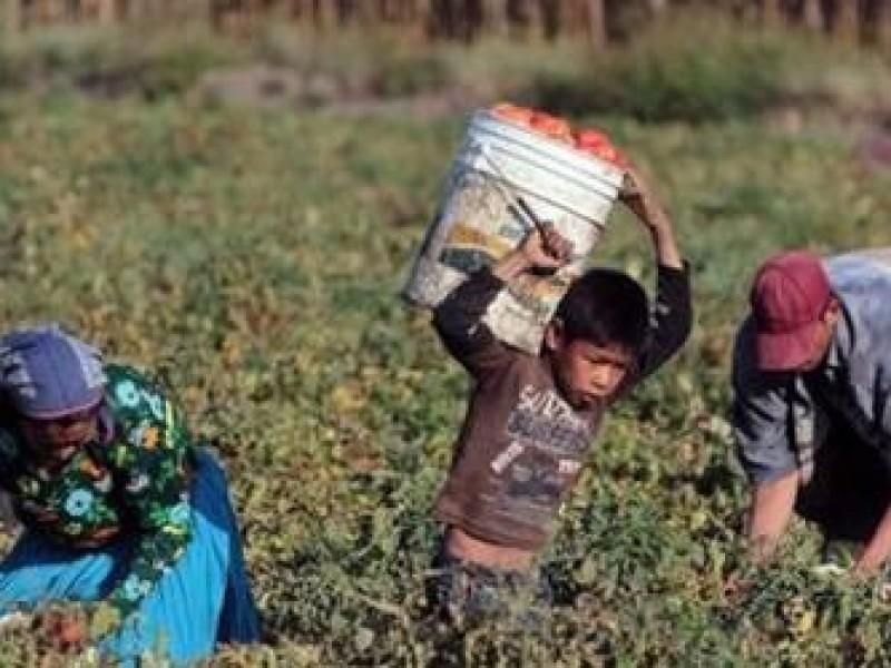 Busca Sonora erradicar el trabajo infantil