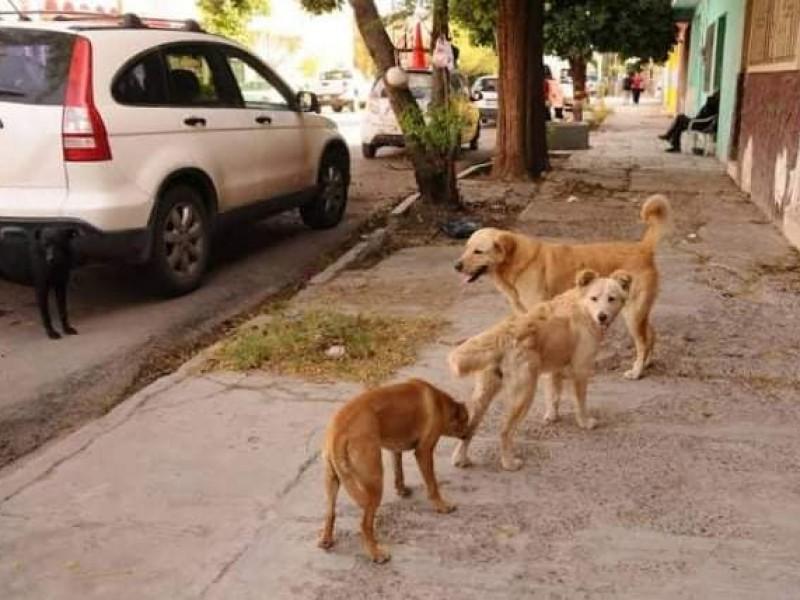 Buscan controlar sobrepoblación de animales en situación de calle