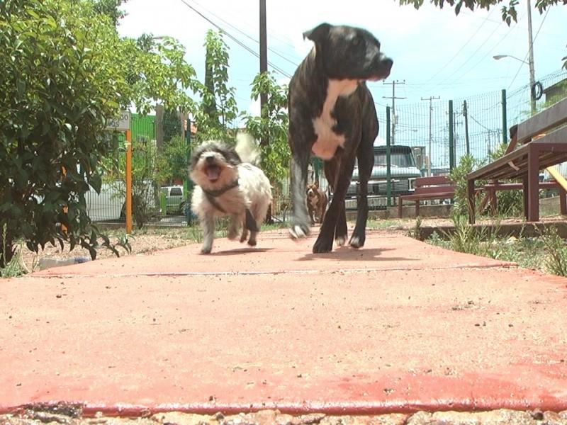Buscan crear conciencia en cuidado de mascotas
