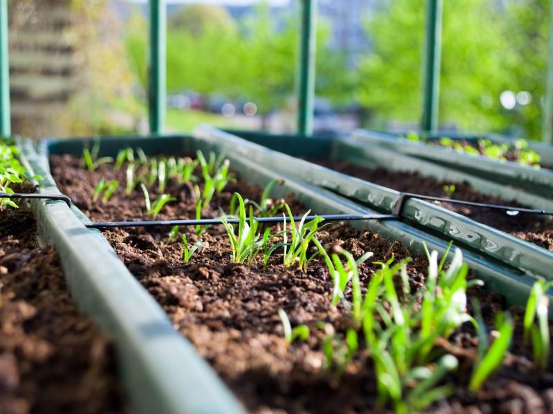 Buscan fomentar educación ambiental con huertos urbanos