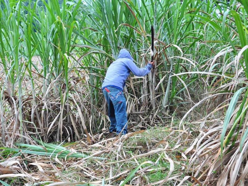 Buscan mejorar condiciones de trabajadores azucareros