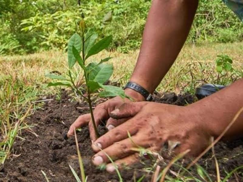 Buscan mitigar impacto ambiental de incendios forestales en la región