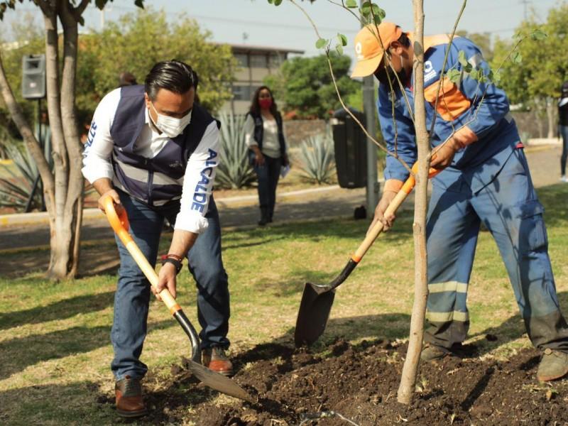 Buscan promover cuidado de árboles en Querétaro