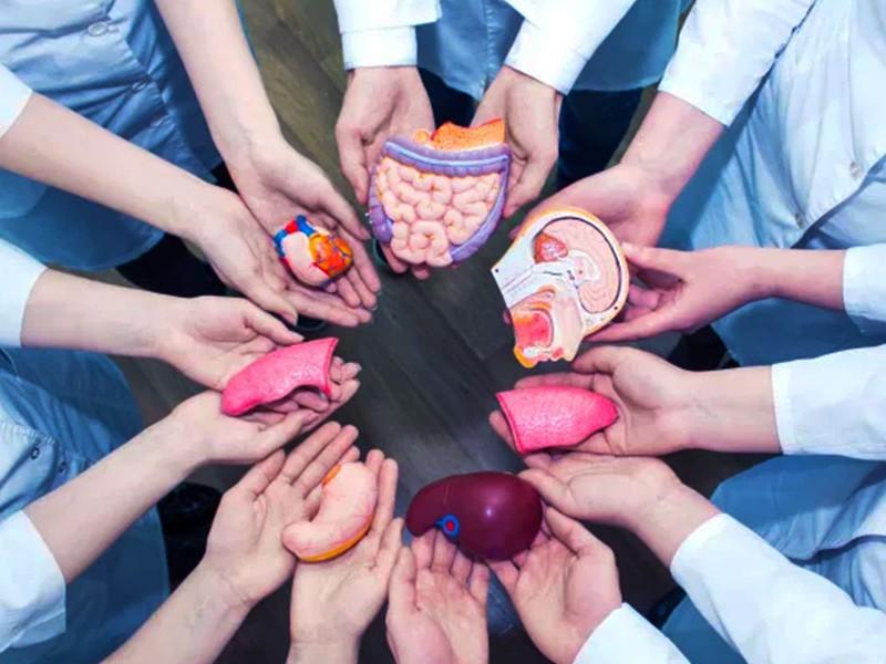 Buscan promover cultura de la donación de órganos en Veracruz
