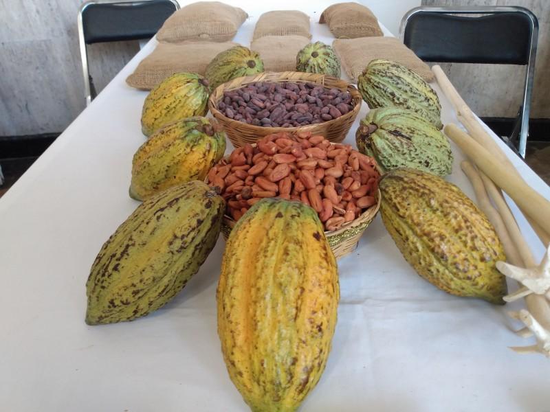Buscan reactivar la actividad comercial del cacao