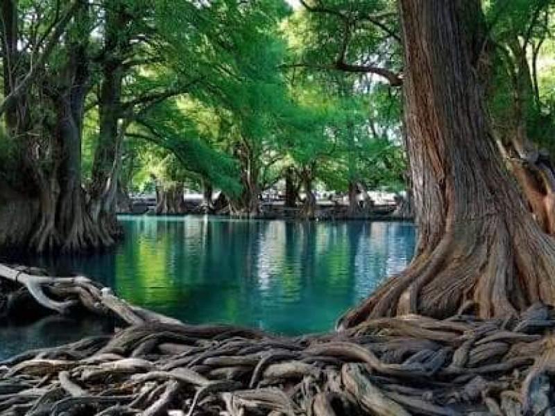 Buscan revertir deterioro ambiental en el lago de Camécuaro